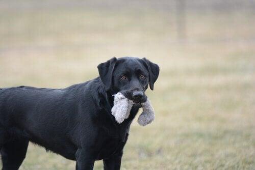 7 farlige genstande for hunde
