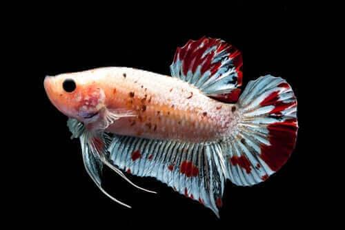 Finner på en fisk