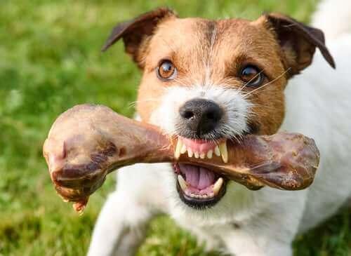 Når hunde bliver aggressive for at forsvare føden