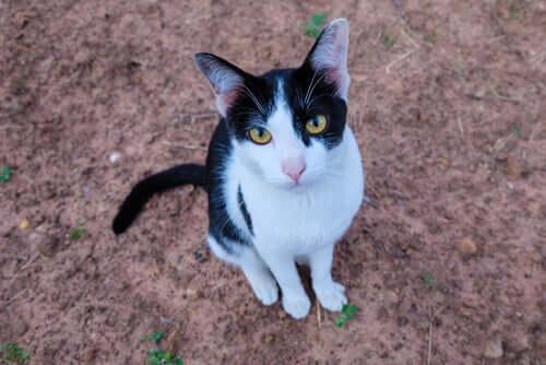 Toldo, kat besøger ejers grav dagligt