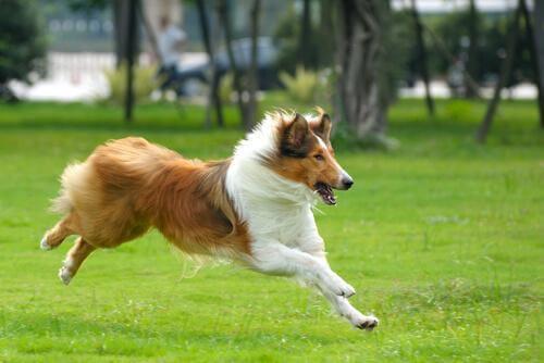 hund løber i en park