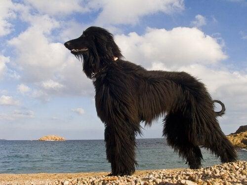 en hund på stranden