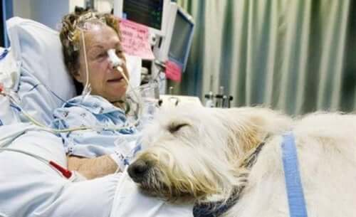 Hospital tillader kæledyr i Canada