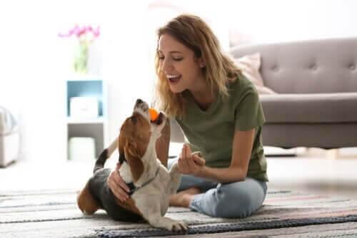 Ung kvinde leger med sit kæledyr under corona-krisen