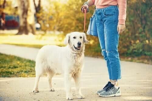 Hund er ude på gåtur