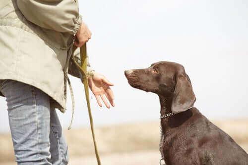 Ejer går tur med hund i snor for at bekæmpe døsighed hos hunde