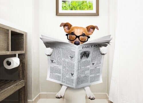 Kæledyrspleje – Sådan stoppes diarré hos hunde