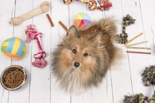 Sådan underholder du dine kæledyr under corona-krisen