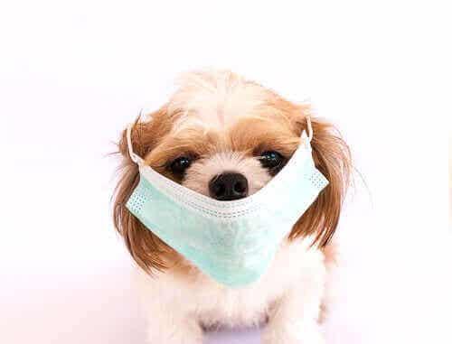 De 6 mest smitsomme sygdomme hos hunde