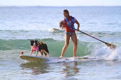 hund og ejer på surfbræt