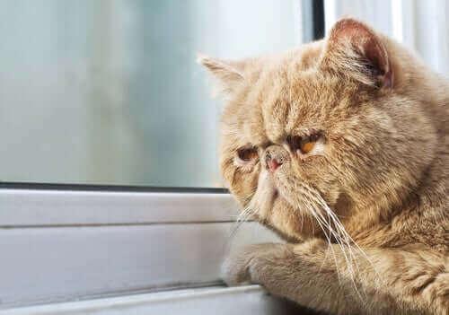 Katte kan udvise ændringer i deres energiniveau, appetit, søvnmønster og temperament, når de oplever mindre eksponering for lys