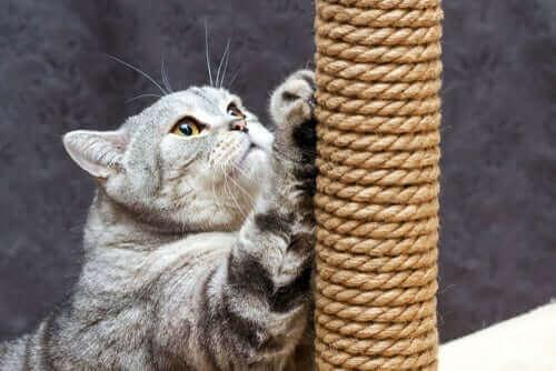 Kat med kradsetræ