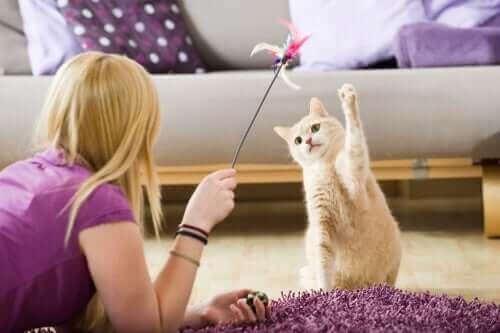 Sådan kan du underholde kæledyr under lockdown