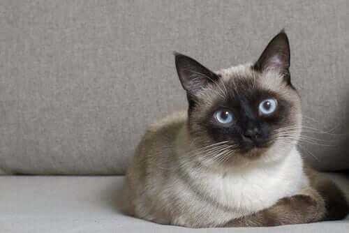 Kat, der ligger ned