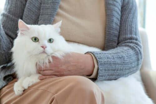 Hvordan er adfærd hos ældre katte?
