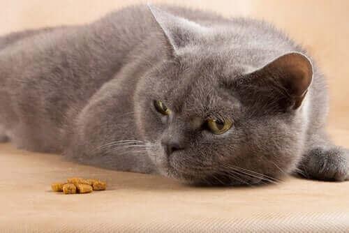 Kat ligger ved siden af tørfoder