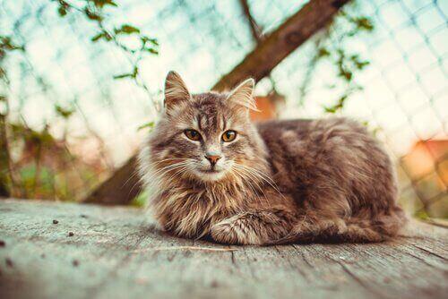 en kat nyder solen