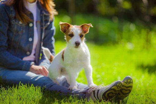 kvinde og hund på græs