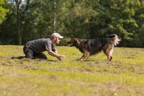 Mand illustrerer, hvordan man kan lege med en hund