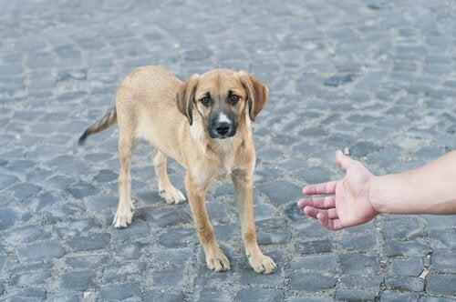Mand, der rækker ud efter gadehund
