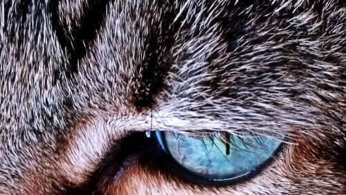 Kattens pels - Hvorfor skifter den farve?