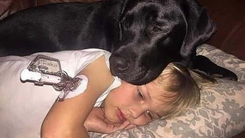 Hund passer syg pige som eksempel på, når hospital tillader kæledyr