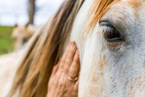 en hest bliver klappet