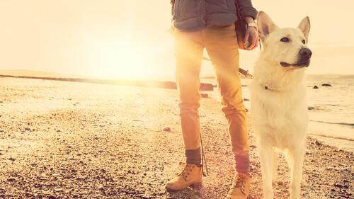 Har du svært ved at være væk fra et kæledyr?