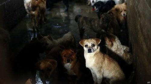 Mange hunde samlet i en gård