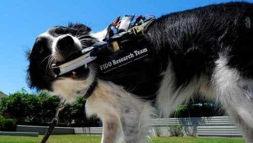 Vest gør det muligt for hunde at tale med deres ejer