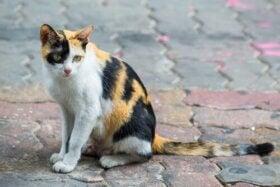 Forladte dyr: Hvert 4. minut bliver en kat eller hund forladt