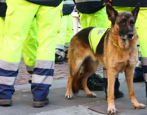 Spaniens bedste livredderhund går bort