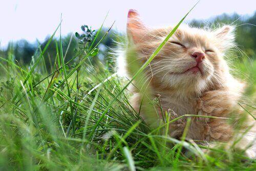 3 tips til at holde din kat afkølet om sommeren