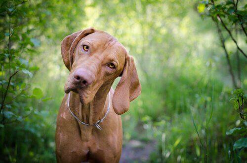 Det er vigtigt at kende din hunds blodtype