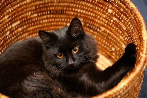 en sort kat i en kurv