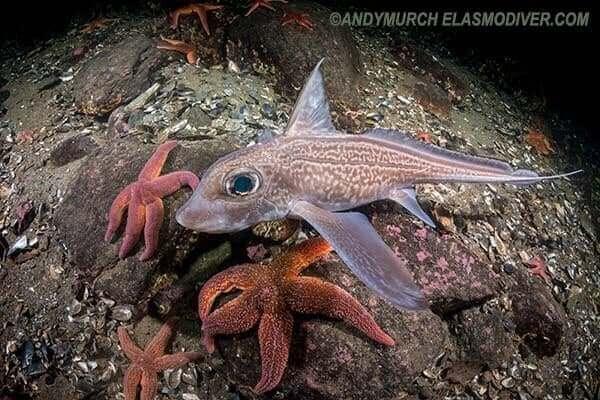store øjne på fisken