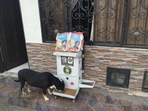 6000 hunde drager fordel af Comedog
