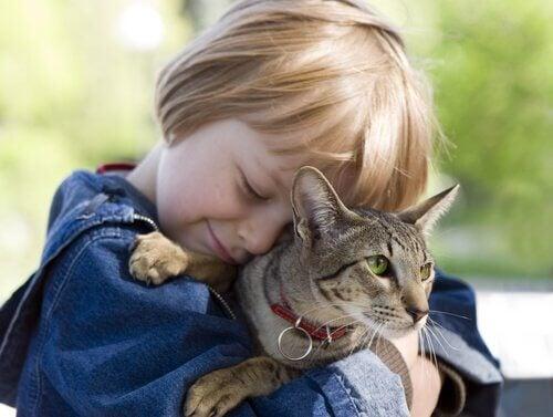 5 lektioner, som børn kan lære af katte