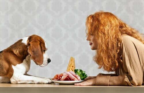 De vigtigste næringsstoffer til hunde