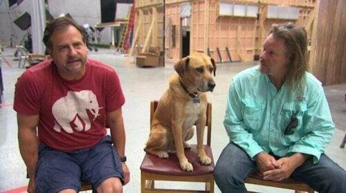 Hollywoodhunden Kato på settet