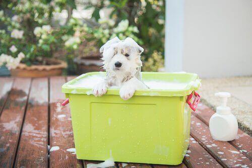 Find den bedste hundeshampoo til dit kæledyr