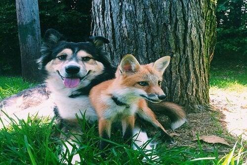 Hund og ræv ved træ