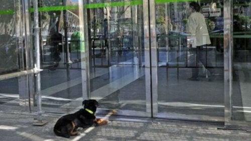 Hund tilbragte to dage og nætter og ventede på sin ejer uden for hospitalet, til stor forundring for forbipasserende og medarbejdere på hospitalet