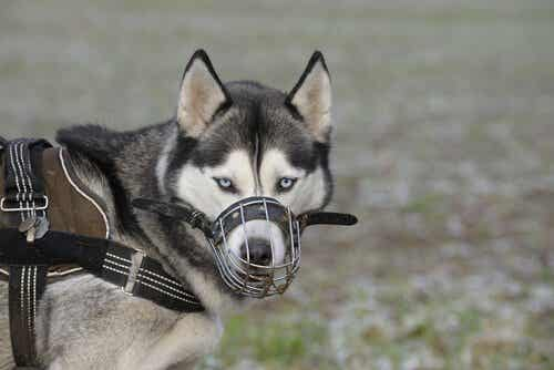 Hvornår skal jeg give min hund mundkurv på?