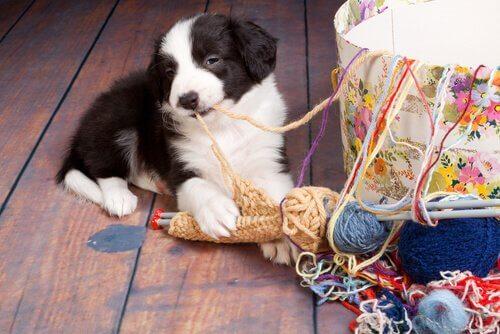 7 ulykker i hjemmet, der kan skade din hund