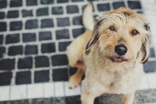 Sådan kan du beskytte en hund mod influenza