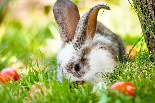 Kanin på græs