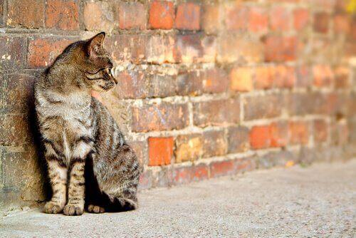 Kat, der sidder ved en murstensvæg