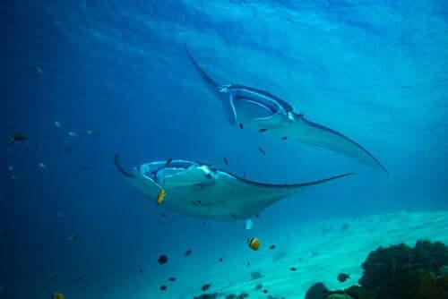 Marine reservater og beskyttede havområder