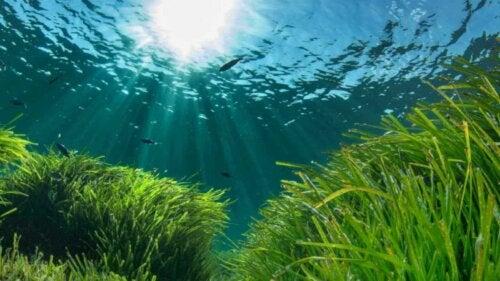 Posidonia Oceanica marine reservater